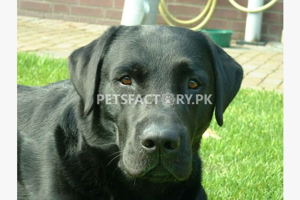 Buy & Sell Pets, Pets for Sale, Buy Pets Online in Pakistan